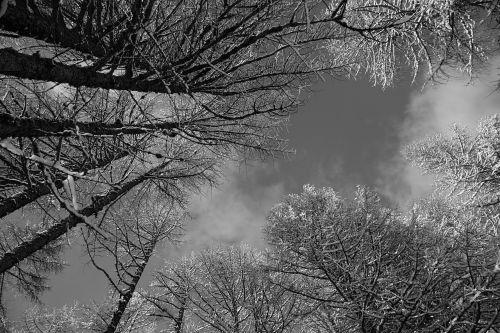 b w nature sky
