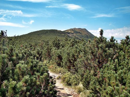 babia top mountain pine the path