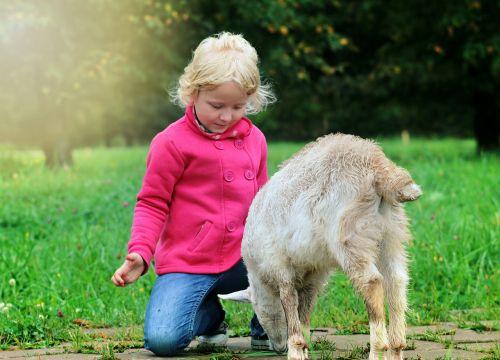 baby goat blessing