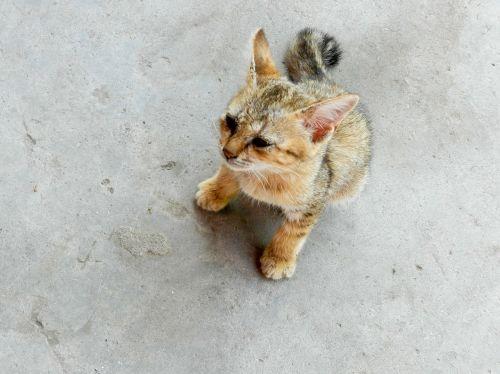 baby stray cat cat