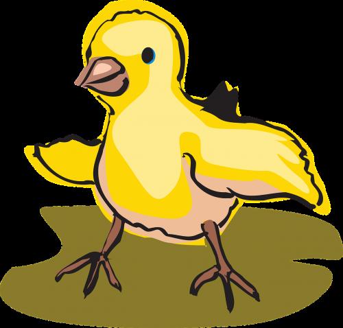 baby bird walking