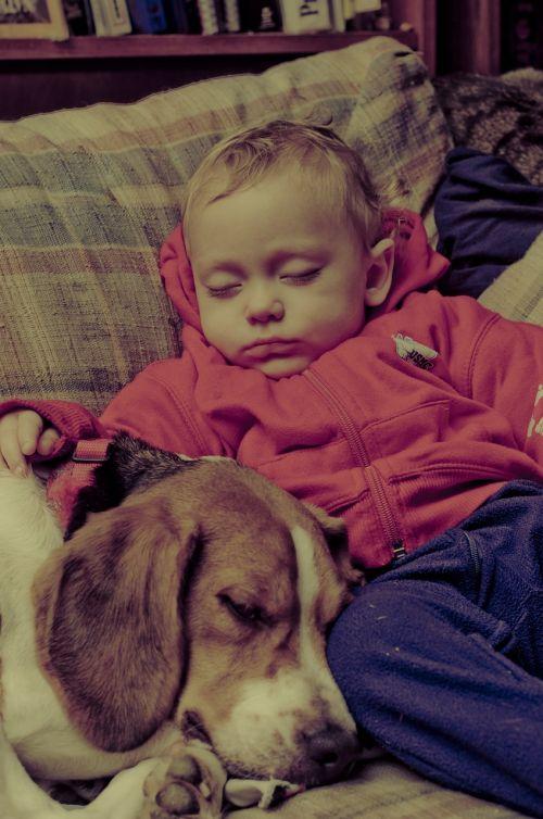 baby dog beagle