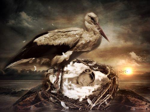 baby nest stork