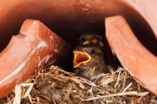 Baby Bird In Nest