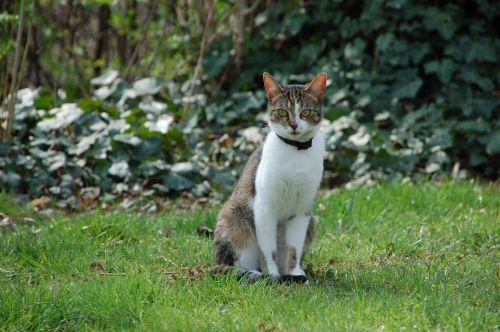 baby cat cat domestic cat