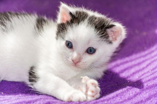 baby cat cat baby kitten