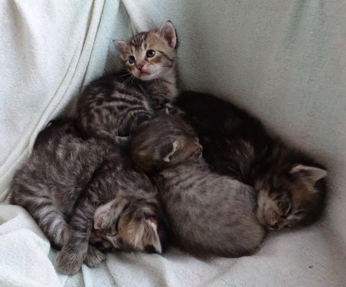 baby cats sleep sweet