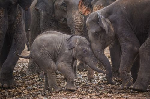 baby elephant elephant sri lanka