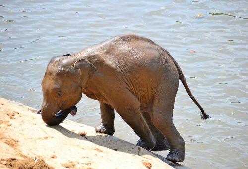 baby elephant elephants bath
