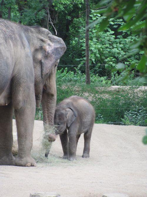 baby elephant mother elephant zoo