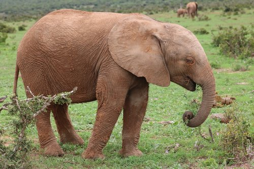 baby elephant  baby  baby animal