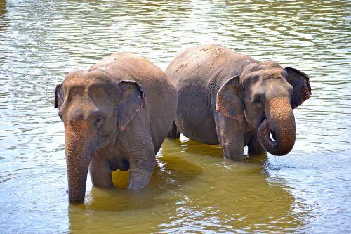 baby elephants elephants bath