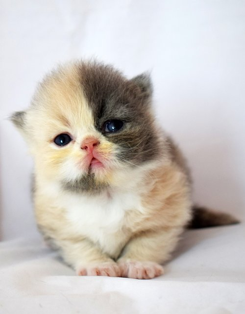 baby kitten  pussy  cat