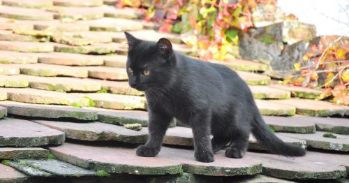 baby kitten black discovery