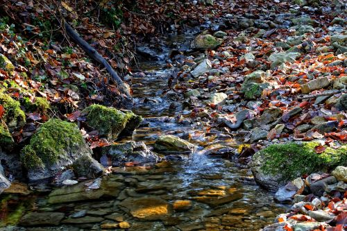 bach stream bed nature