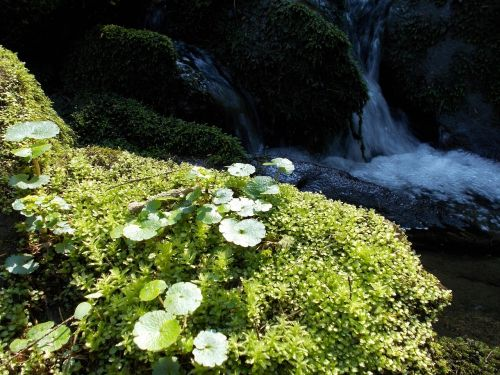 bach nature environment