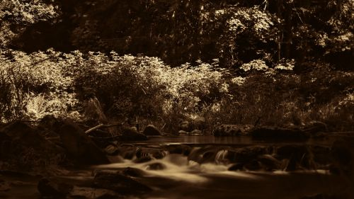 bach forest summer