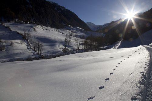 back light trace snow
