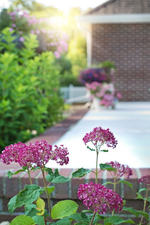 back porch  flowers  garden