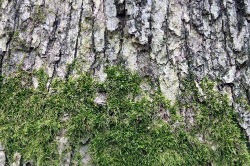background texture moss