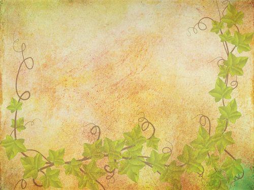 background texture ivy ivy