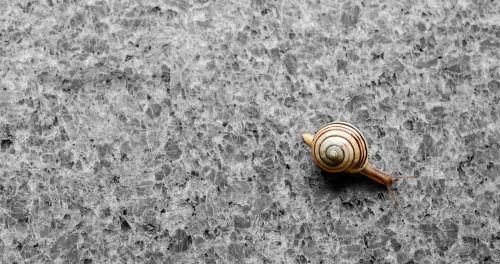 background wallpaper snail