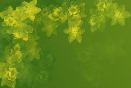 background osterglocken green