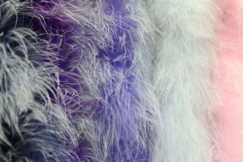 background boa feathers