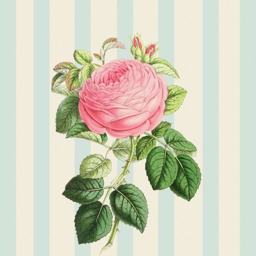 background rose pink