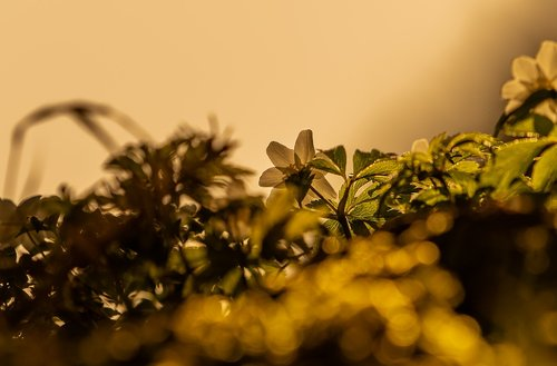 background  nature  plant