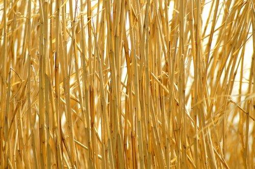 background  straw  golden
