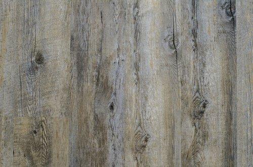 background  paul  tree