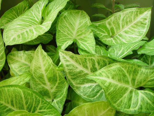 background leafy leaves
