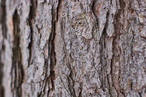 background  log  wood