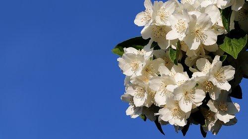 background  bauer jasmin  bush