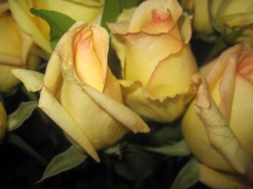 Background Flower Love