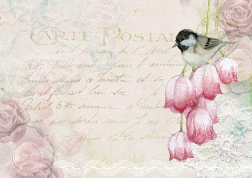 Background Scrapbook Pink Tulips