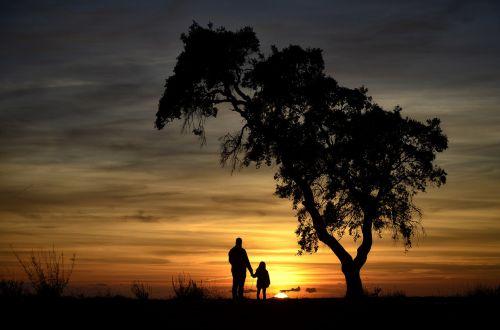 backlight nature sunset