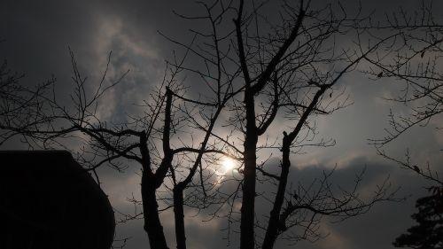 backlight wood sky