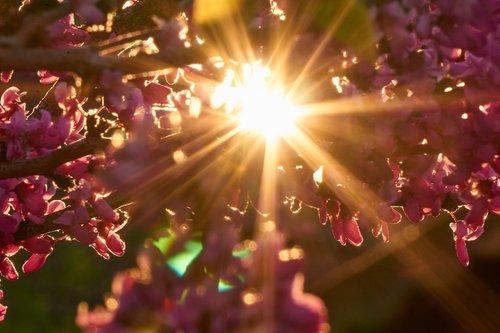 backlighting  sun  sunset