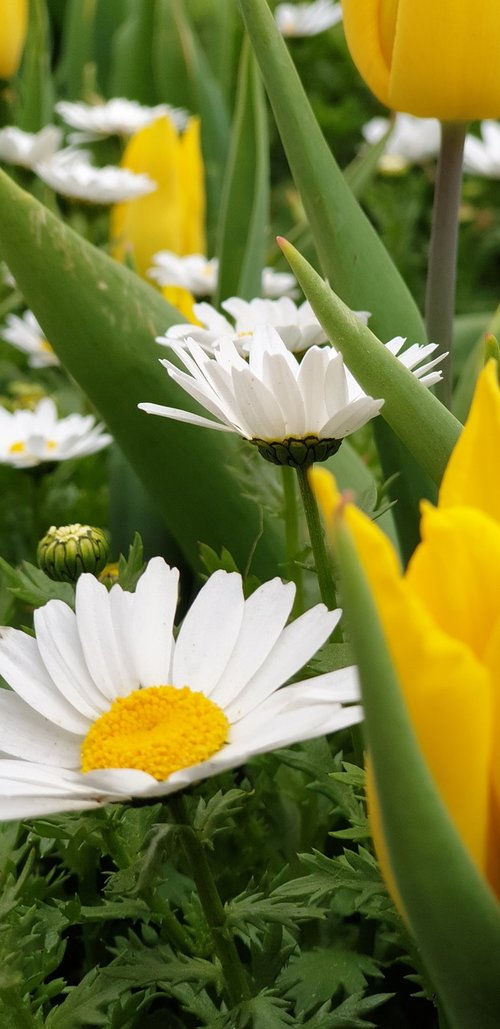 backround  flower  naturale
