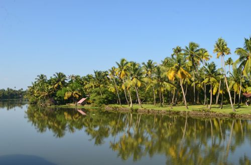backwater coconut trees coconut