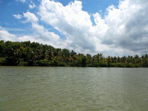backwaters lake coconut trees