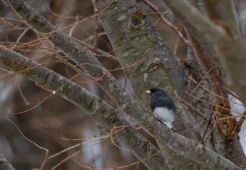 backyard  wildlife  birdwatching