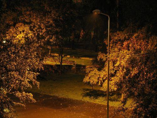backyard lantern night