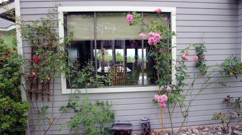 Backyard Window