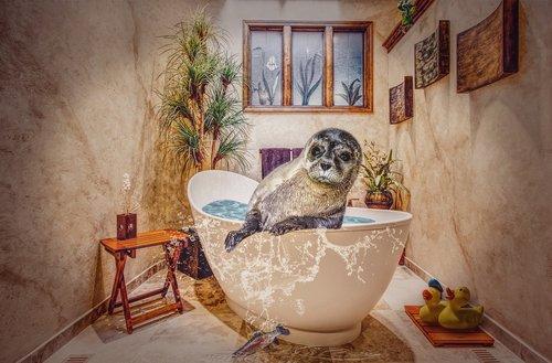 bad  tub  swim