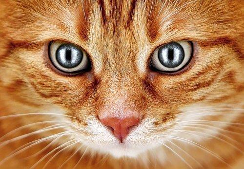 bad look  cat  red