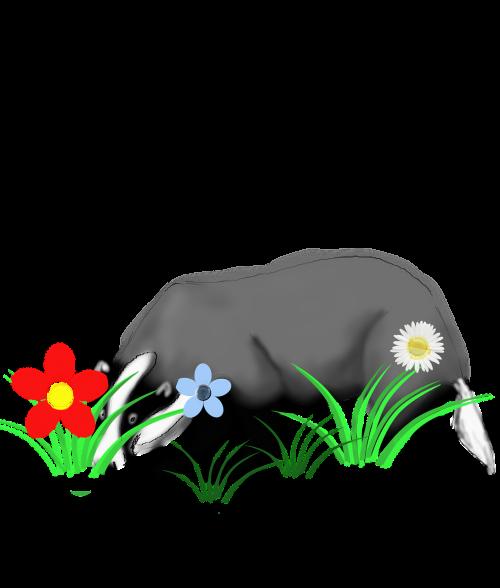 badger animal forest