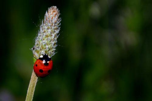 baja insecta grass